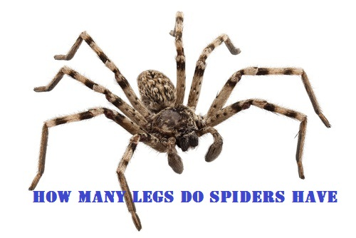 Do You Want to Know How Many Legs Do Spiders Have